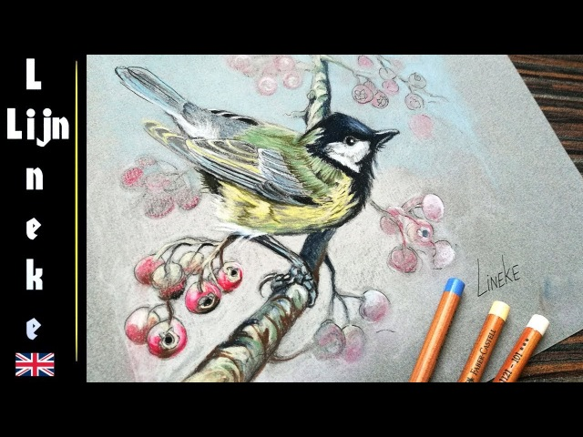 How to draw a Great Tit (bird titmouse chickadee) in Pastel pencil