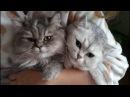Вот это RUMBA Советуем посмотреть НЕОБЫКНОВЕННые чувства котенка LIFE is cats love RUMBA
