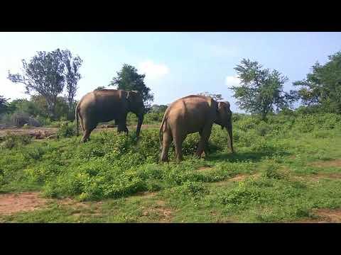 Что такое джип-сафари на Шри Ланке. Дикая природа нац. парка Уда-Валаве.