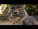 кот вестрн