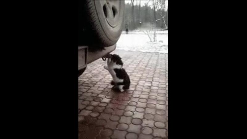 кот токсикоман