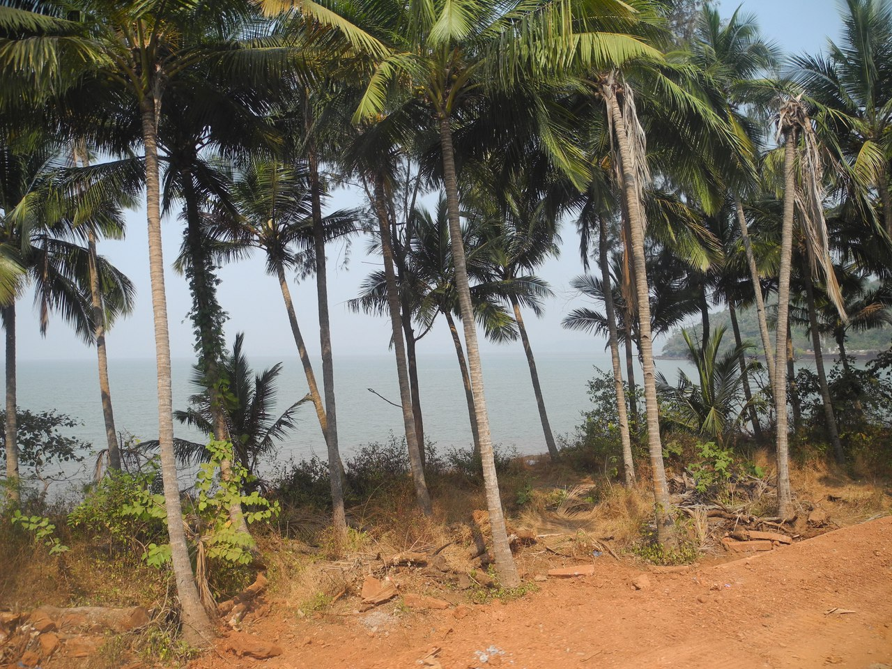 гоа пальмы