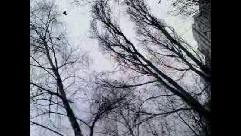 C лёшей закупились - а вчера неожиданно с юга прилетели дрозды полевые в Москву. странное явление. всем привет)) **Лала