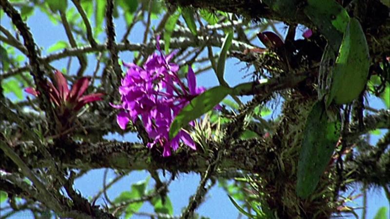 BBC «Как вырастить планету (2). Сила цветов» (Познавательный, природа, исследования, 2012)