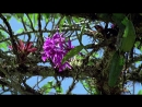 BBC Как вырастить планету 2 Сила цветов Познавательный природа исследования 2012