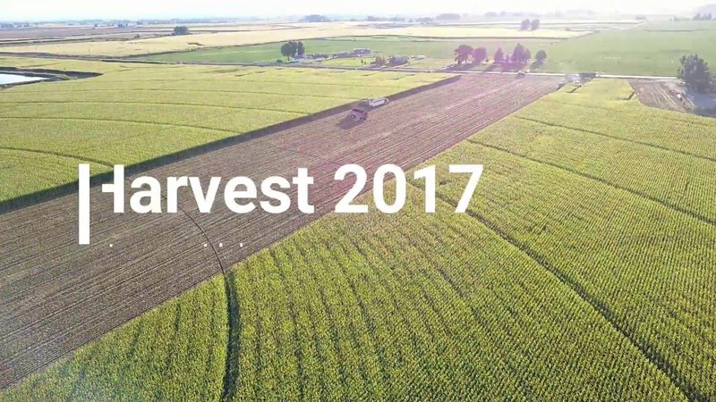 Corn Silage Harvest 2017