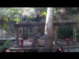 The Jungle Book _ Sarabande (Mayan Style) - ThePianoGuys