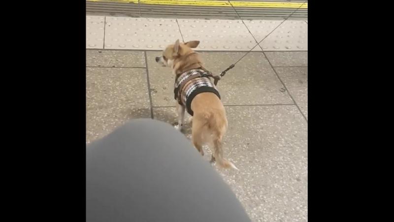 Please stand back from the platform edge... my lit... Лондон 12.09.2017