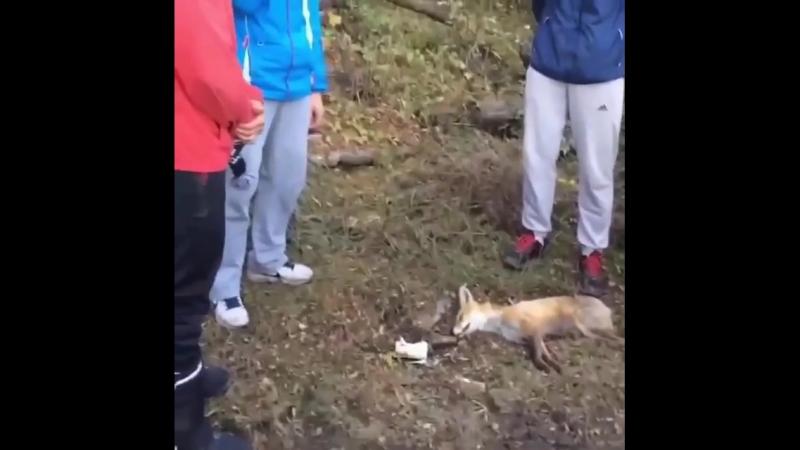 Похороны лисы [IRTube]