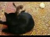 Кот и горностай