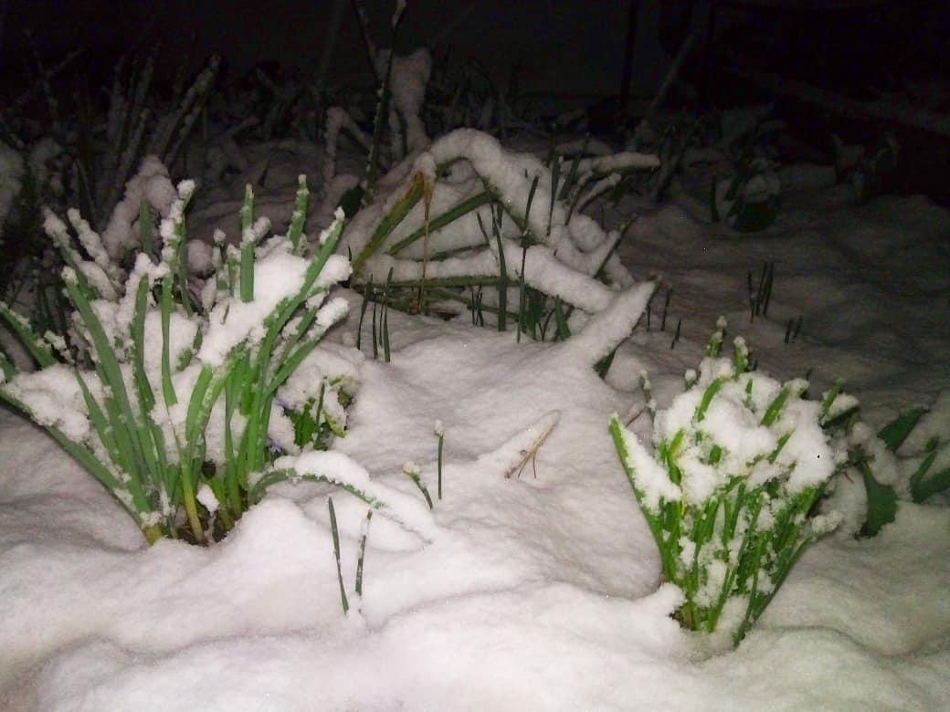 Снегопад в Республике Крым в ночь на 22 марта 2018 Россия