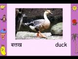Birds (Hindi)