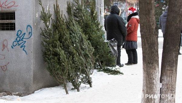 Первые елочные базары откроются в Томске 10 декабря