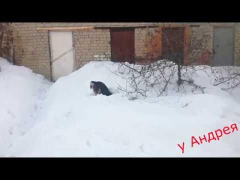 собака роет яму и вечно недовльный кот василий