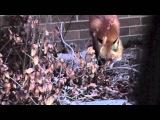 Fox and Baby Rabbit at Play