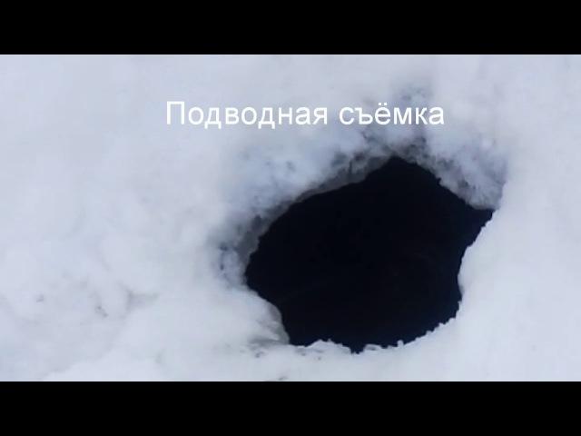 Подводная съёмка зимой. Караси