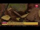 Вбивство Окуєвої на місці розстрілу знайшли гільзу Перші про головне День 13 00