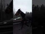 Кони бегут по Мурманке