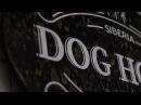 Кафе-бар «Dog House» wow_mayer