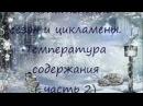 ЦИКЛАМЕН (Cyclamen) Отопительный сезон и цикламены.Температура содержания (часть 2)