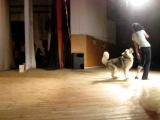 Хаски Самурай - танец