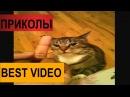 Приколы 2018 приколы с котами VIDEO подборка POZITIVCHIK HD приколы под музыку BEST video !!