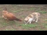 Animals Trolling