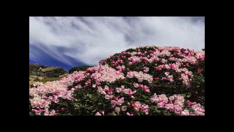 Дорога цветов (Красивая природа)
