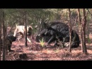 Hog Dogging with Southern Cross Cut Gear and Catch Dawg Productions Part: 2
