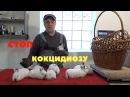 Вздутие у крольчат, профилактика кокцидиоза