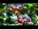 БАБОЧКИ - прекрасные создания