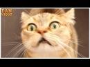 Коты поют Wake Me Up. Поющие коты вейк ми ап. Кошки поют смешное видео.Смешные коты и к...