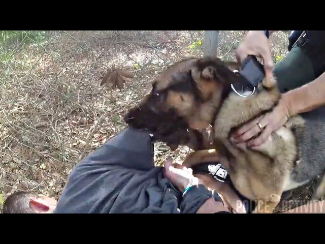 Suspect Apologizes After K9 Takedown Following Pursuit