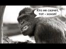 Где мозги майданутых русских На Украине!