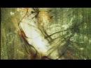 Trois portraits d'un oiseau qui n'existe pas