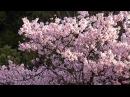 Японская Музыка Для Сна Отдыха И Восстановления Сил Для Релаксации И Медитации