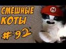 Смешные кошки и коты Приколы про кошек и котов ТОПовая ПОДБОРКА 2017 Funny Cats Compilation