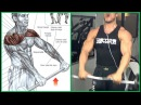 8 Shoulders Workout 8 Ejercicios para Hombros Fitness Body