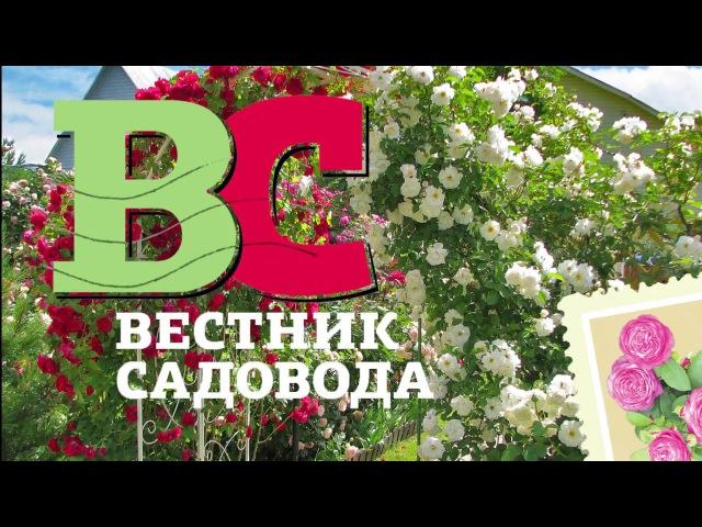 Укрытие штамбовых роз с Алексеем Степановым