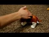 собака реагирующая на звук