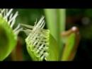 Terra Mater Тёмная сторона растений - Хищные растения / Смертельные ловушки / Убийства и хаос 2013 HD 720