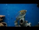 Мой аквариум 200 литров