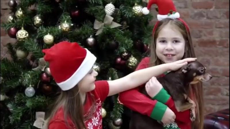 Видео backtage со съемок 24.12.2017 для телеканала Animal Famili