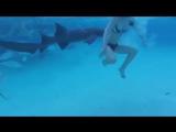 Нападение акулы няньки на девушку снял на видео её муж