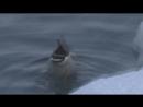 дикие утки зимой wild ducks Челябинск
