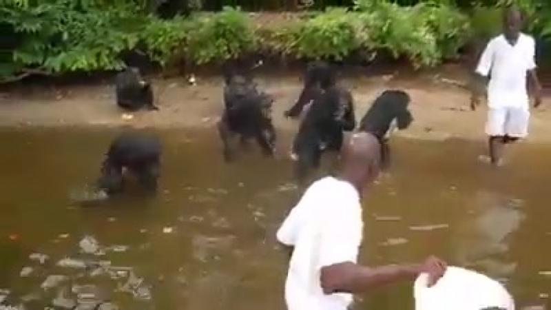 Les singes sont plus civilisés que les réfugiés
