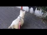 Собака и нарисованный кот