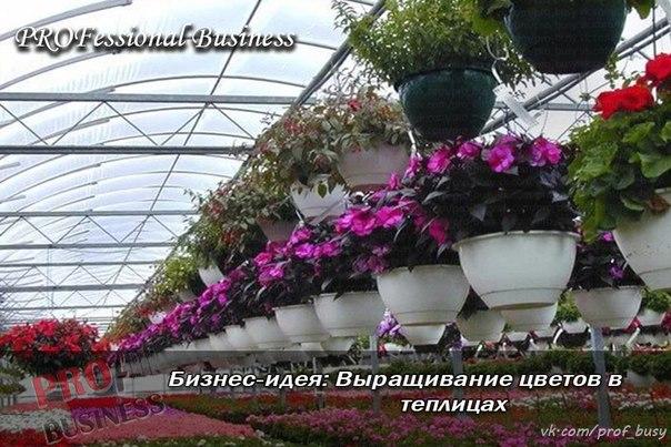 короткие новогодние бизнес план хозяйства по выращиванию цветов лечение требуется при