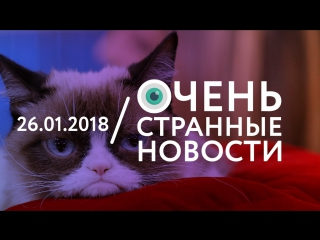 26.01 | ОСН #29. Grumpy Cat