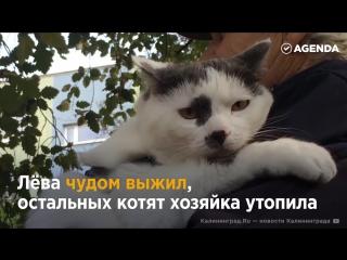 Лёва  самый умный кот в Калиниграде